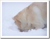 blizzard_20080308_02