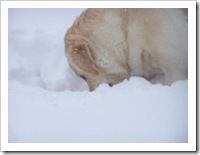 blizzard_20080308_03