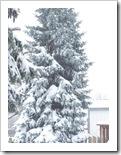 blizzard_20080308_06