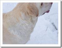 blizzard_20080308_07